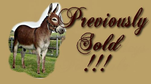 Miller's Meadow Miniature Donkeys Previously Sold