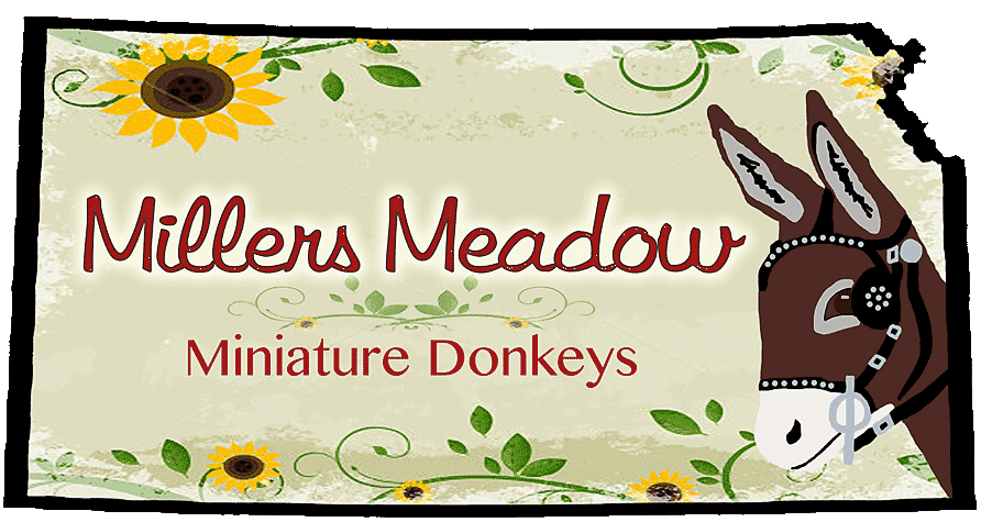 Miller's Meadow Miniature Donkeys